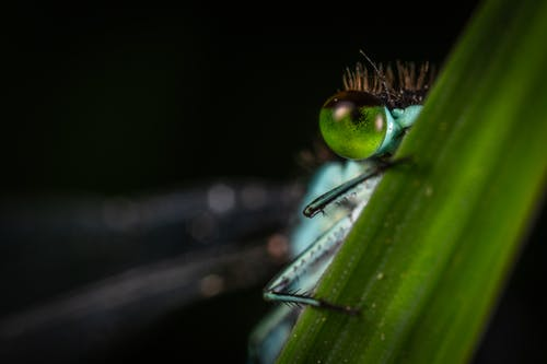 Focus Photography of Green Dragonfly