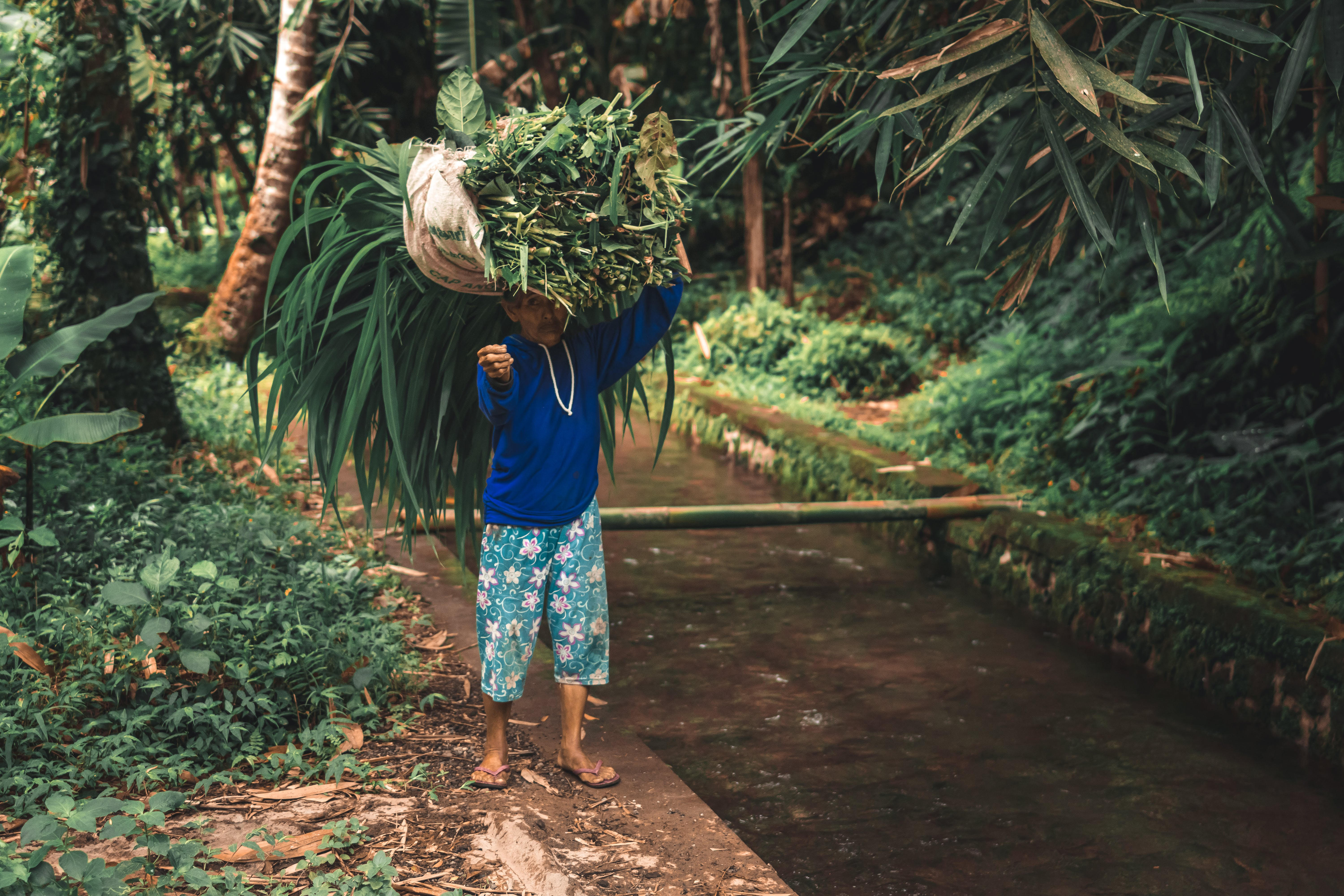 Man in Blue Long-sleeved Shirt and White and Green Floral Shorts Carrying Green Plants