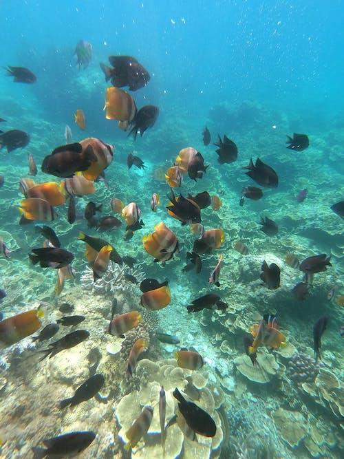 ゴプロ, 写真撮影, 海, 海洋の無料の写真素材