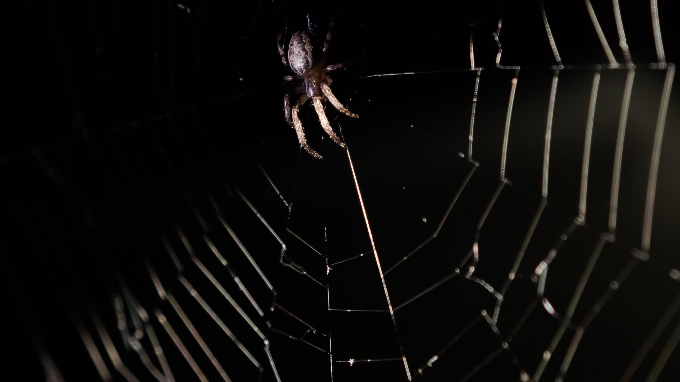 Základová fotografie zdarma na téma lovec, noc, pavouk, pavučina