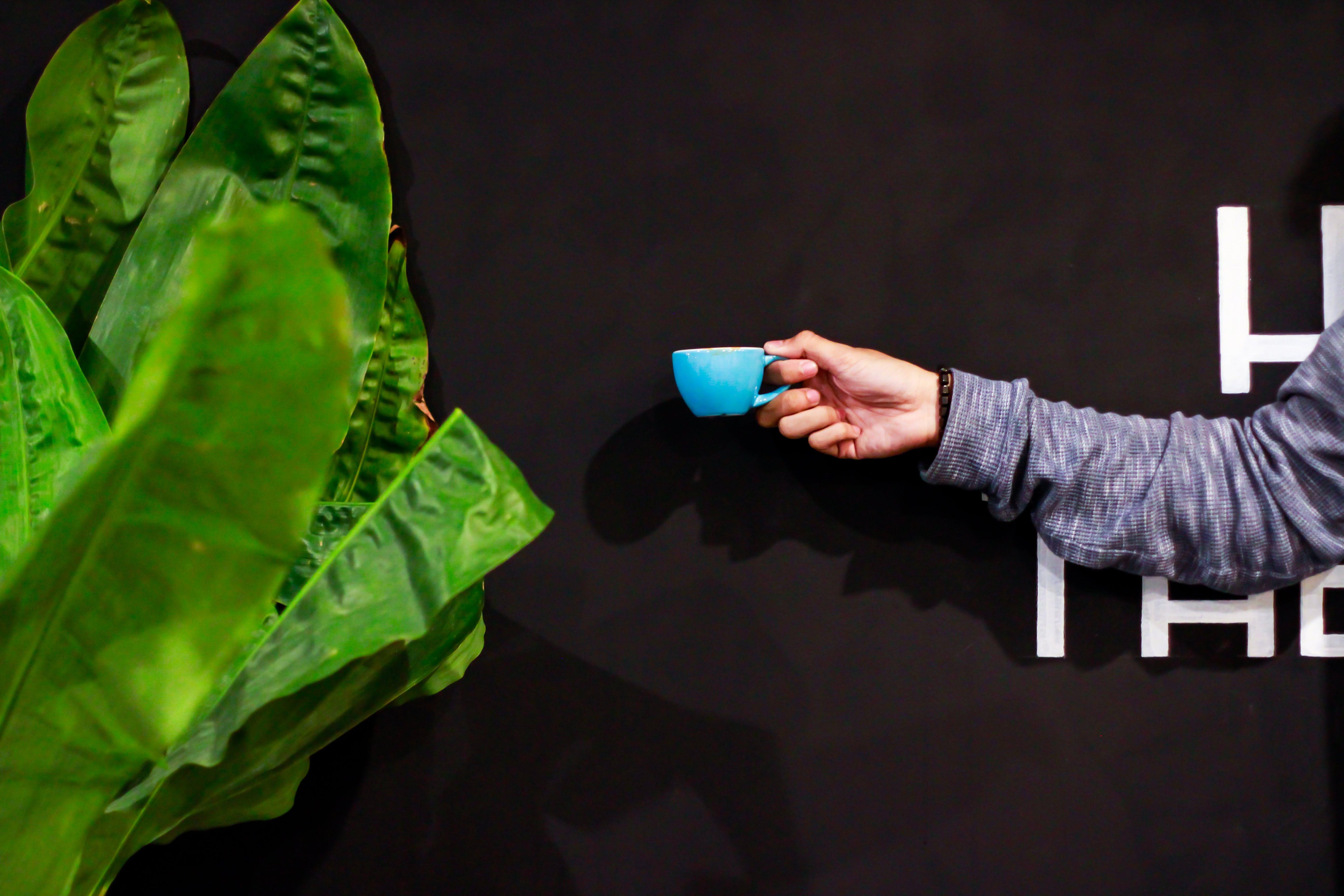 Free stock photo of hand, leaf, shadow, coffee mug