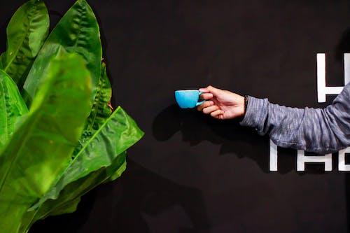 그림자, 손, 커피잔의 무료 스톡 사진
