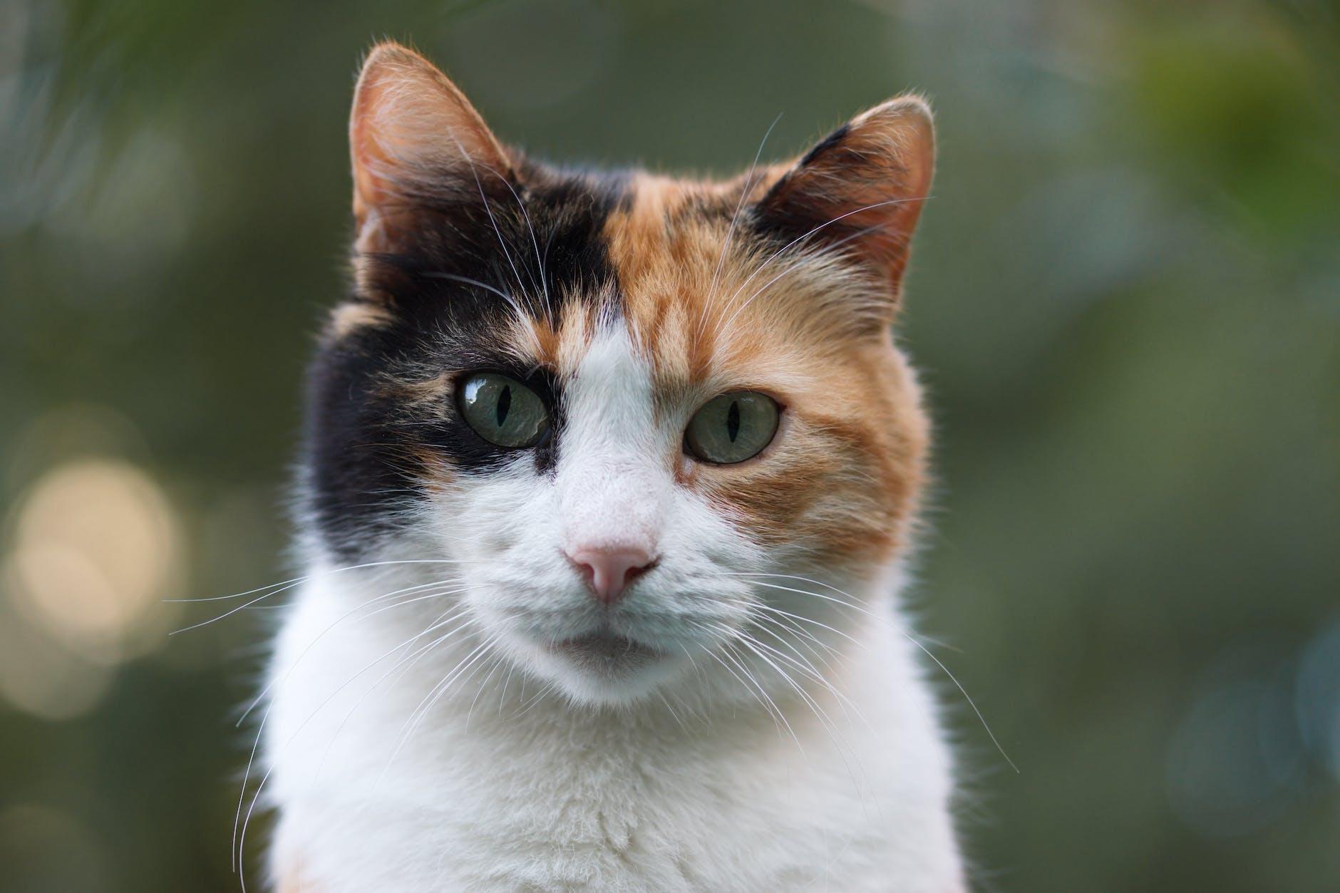 Кіт осяг дзен і став веганом