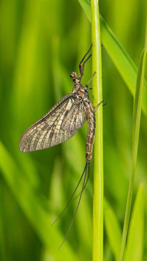 Бесплатное стоковое фото с насекомое, поденка