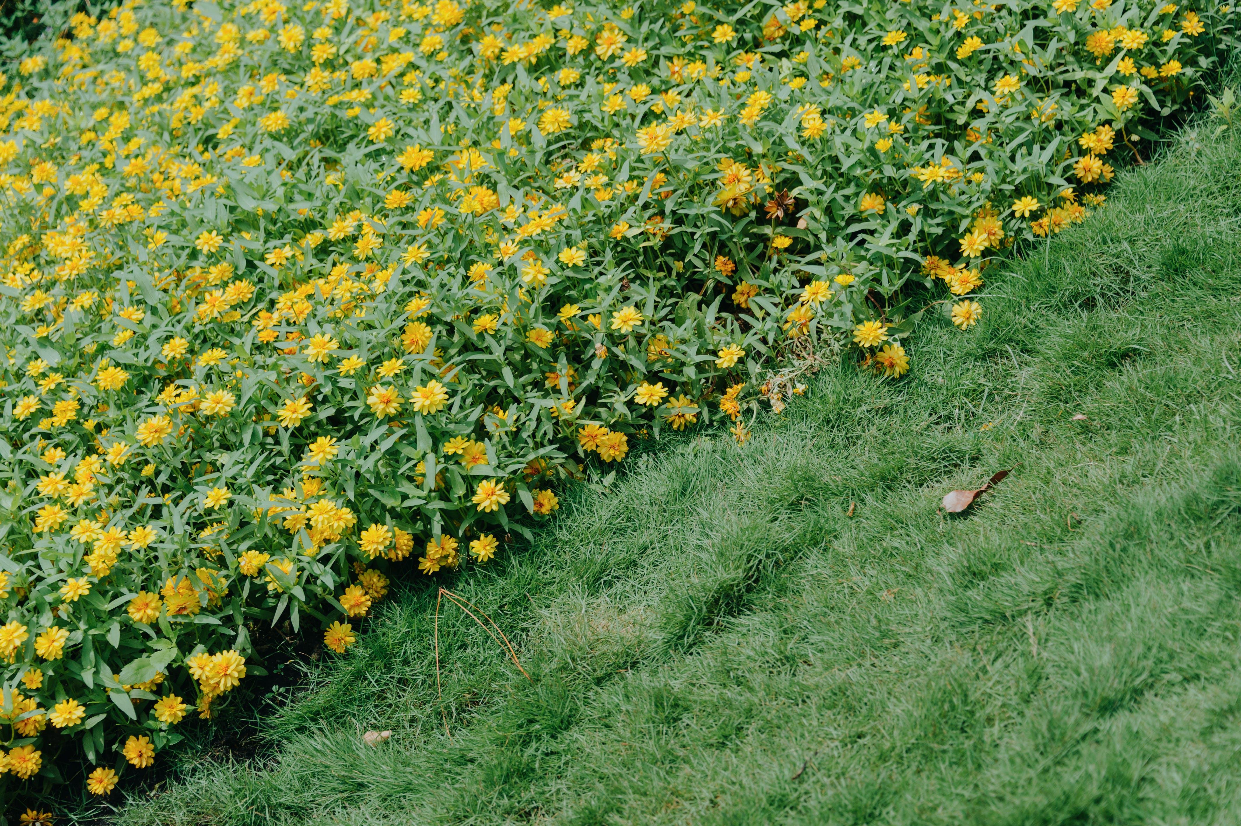 clairière, croissance, environnement