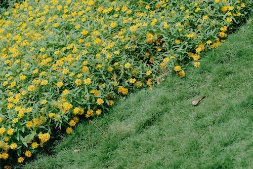 Ingyenes stockfotó fű, kert, környezet, mező témában