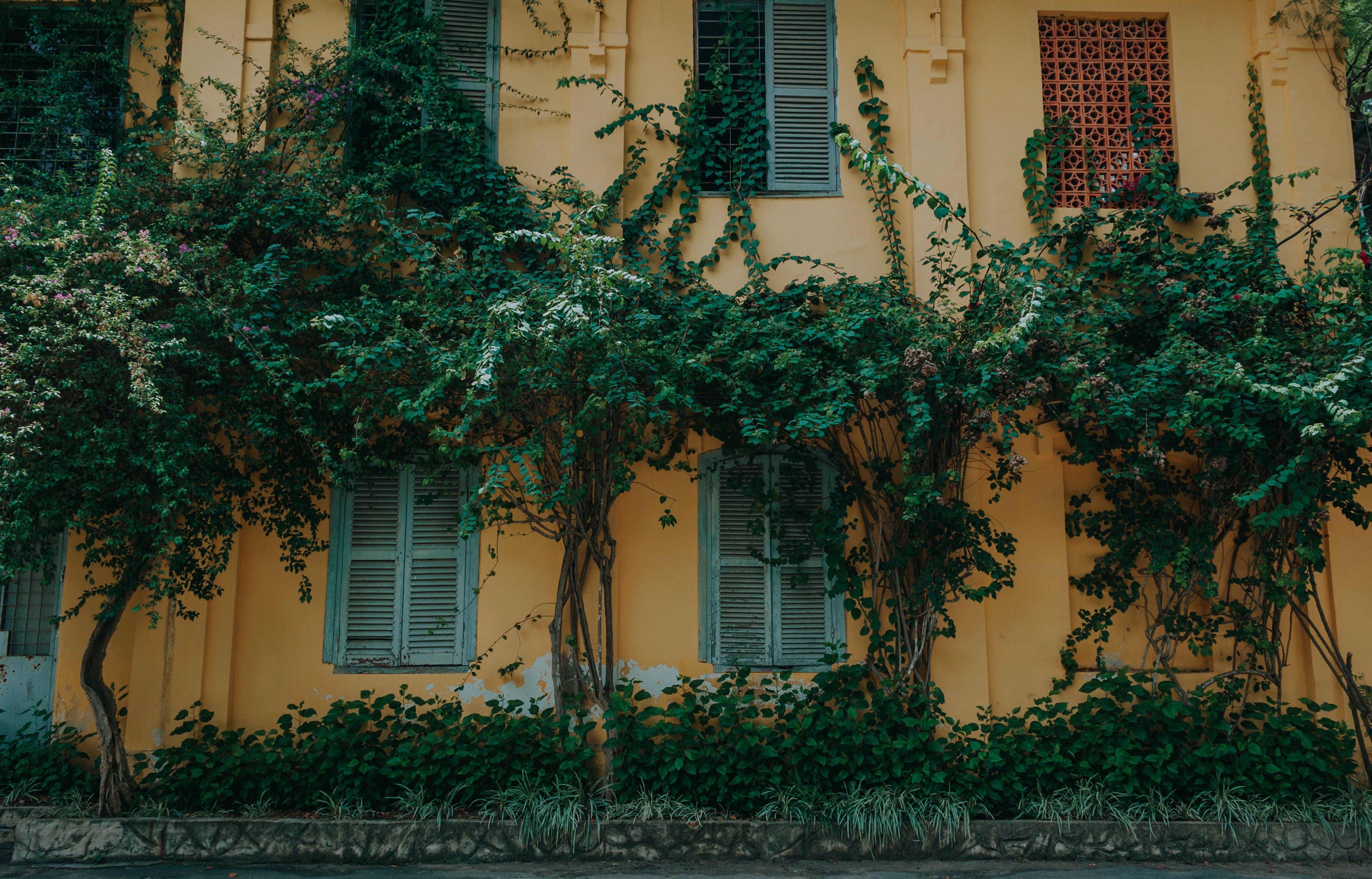 Ảnh lưu trữ miễn phí về các cửa sổ, cây, kiến trúc, mặt tiền