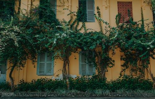 Foto profissional grátis de aparência, arquitetura, árvores, construção