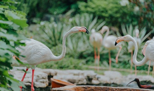 Gratis lagerfoto af dyrefotografering, farve, fjer, flamingo