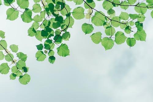 Immagine gratuita di albero, ambiente, cielo, crescita