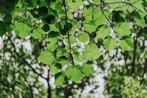 Foto stok gratis alam, berbayang, berfokus, cabang