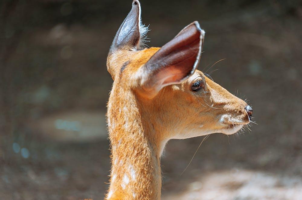 Deer @pexels.com