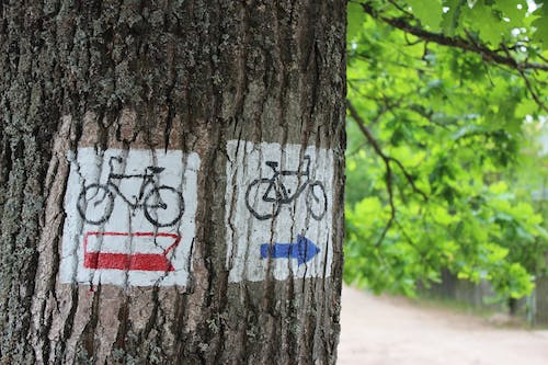 Free stock photo of forest, sign, simbol