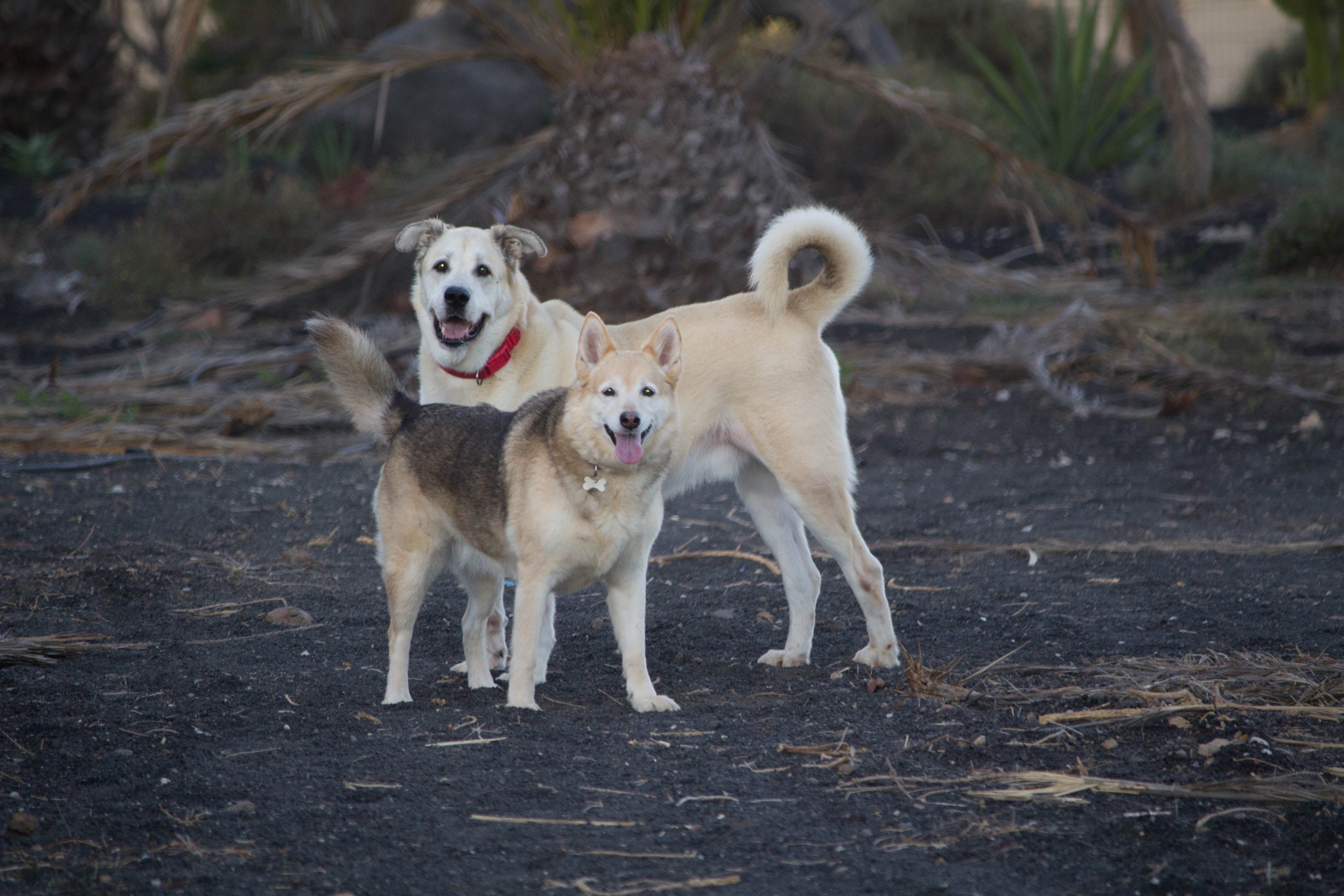 Free stock photo of dogs