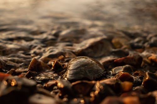 Free stock photo of brown, sea, shell