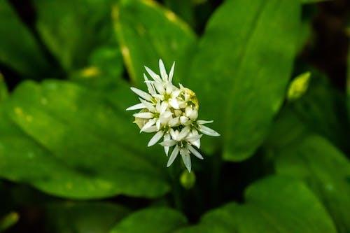 Free stock photo of flower, green, white
