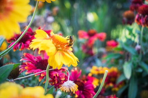 Free stock photo of beautiful flowers, bee, flowers, yellow