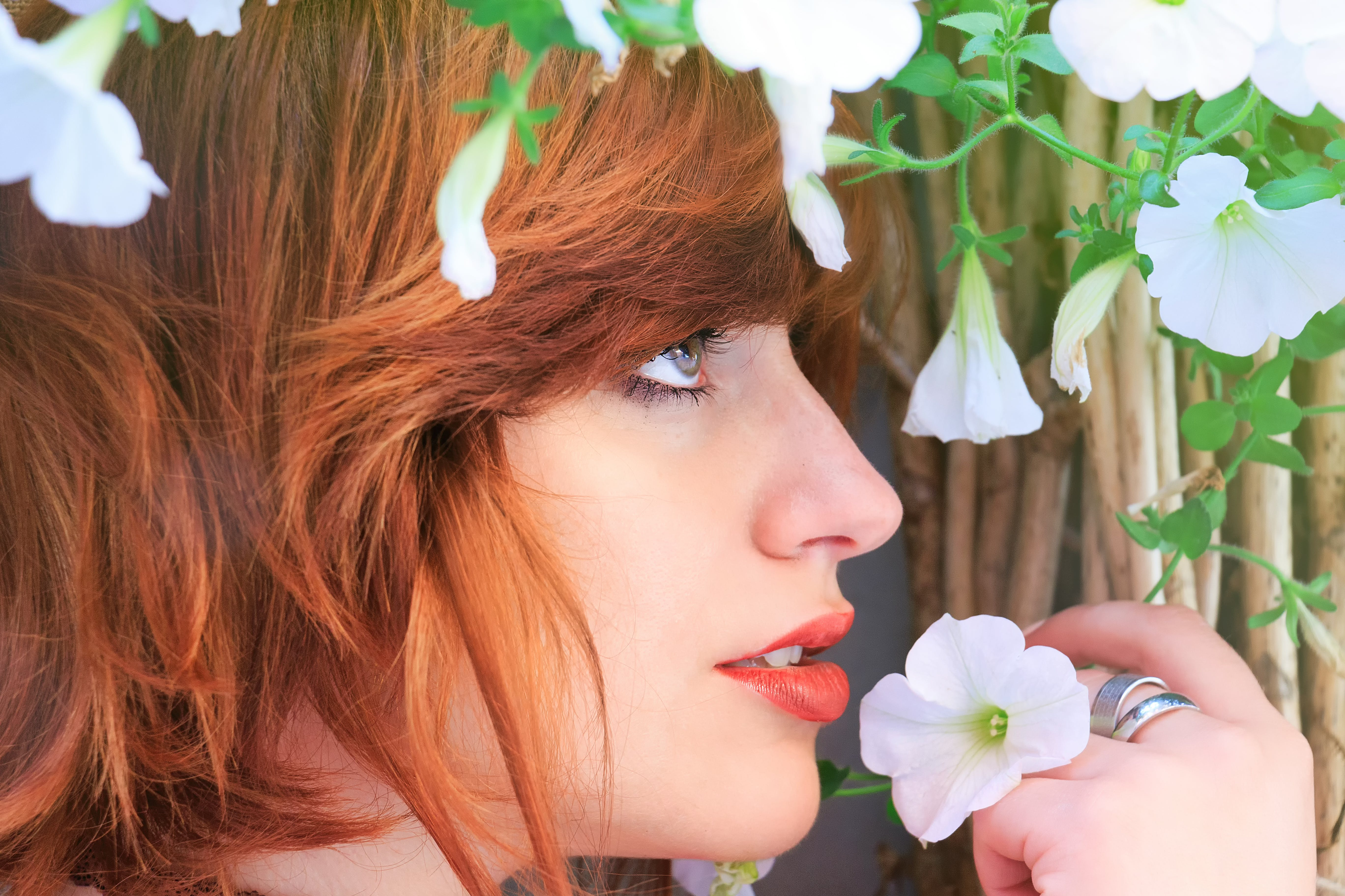Close-up Photo Of Woman Holding White Petaled Flower