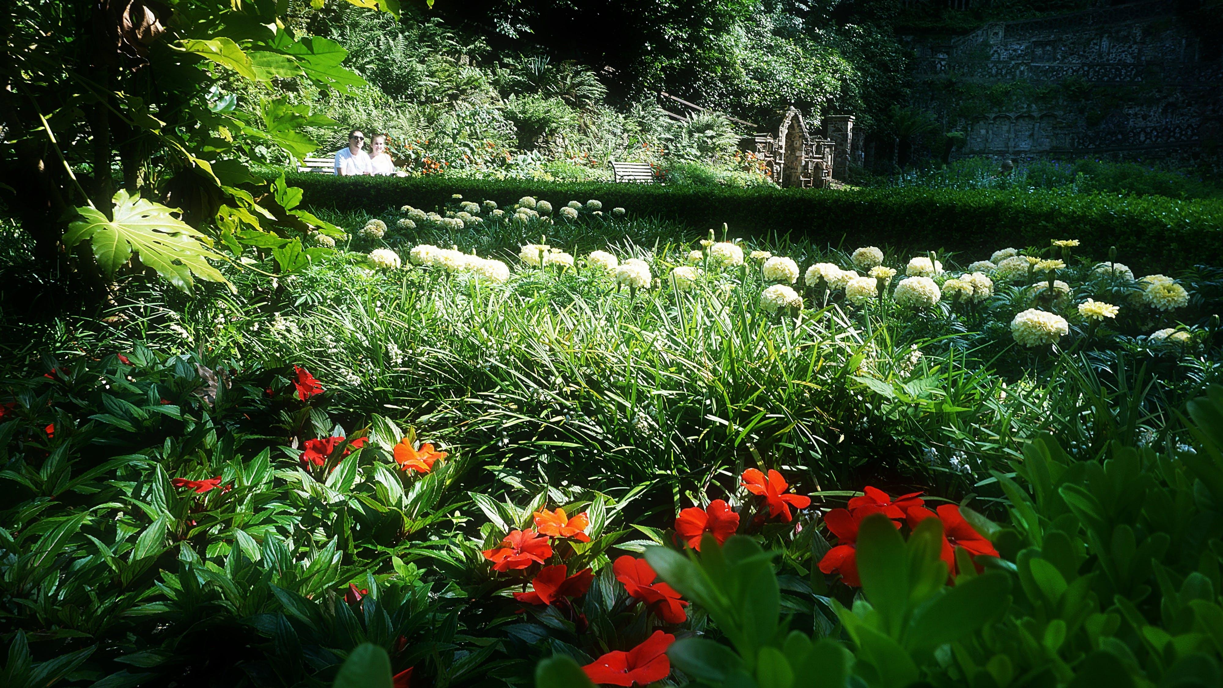 Free stock photo of flowers, summer, garden, park