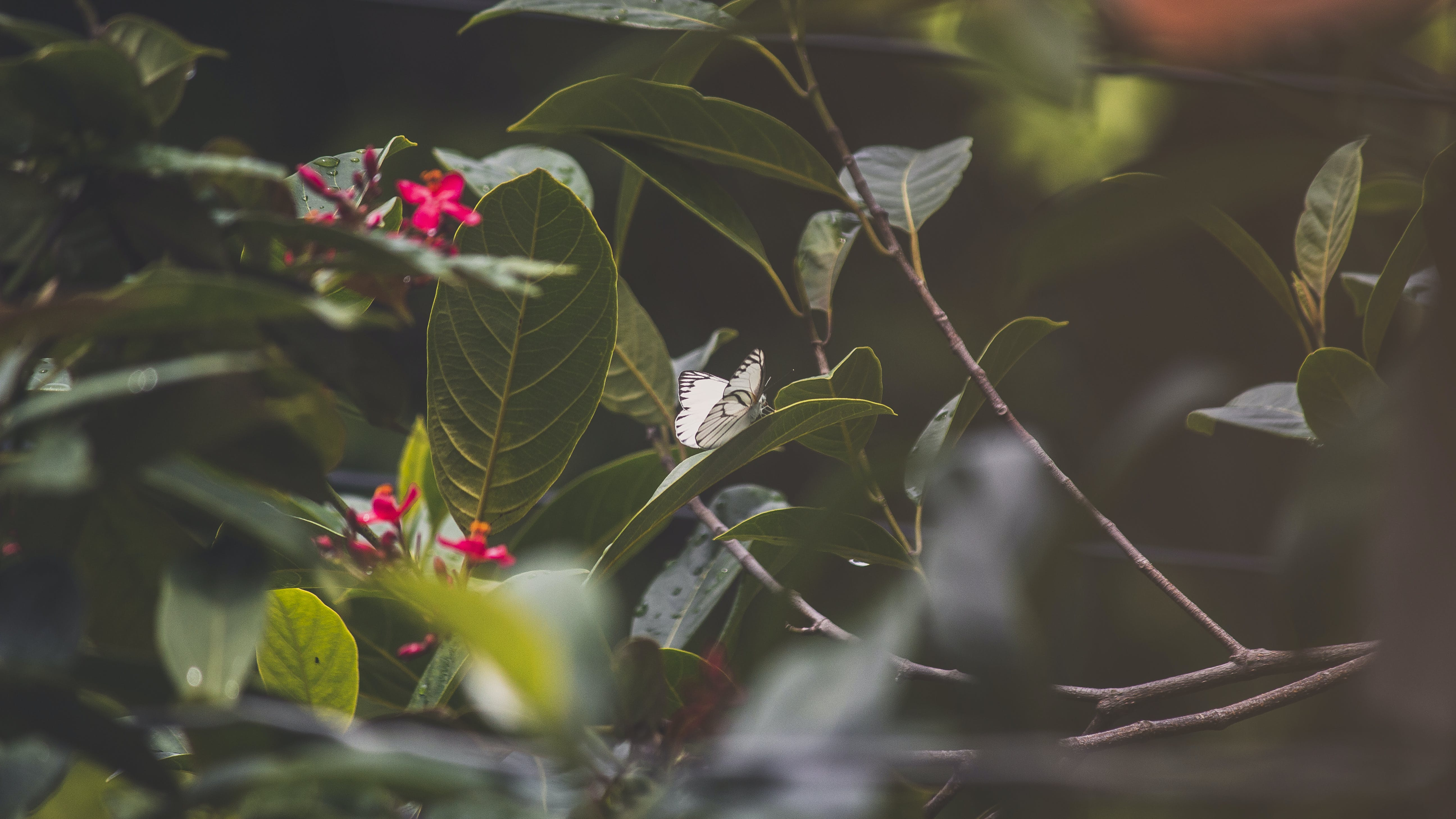 Green Leaves And Red Flowers