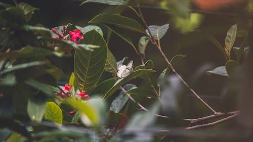 Základová fotografie zdarma na téma flóra, kvést, květ, květiny