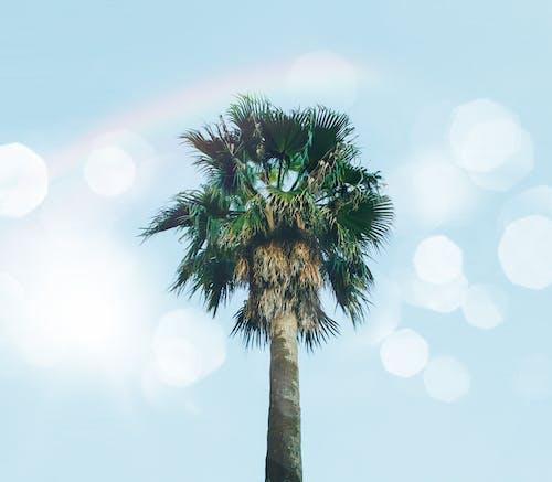 Základová fotografie zdarma na téma fotografie znízkého úhlu, palmové listy, perspektiva, strom