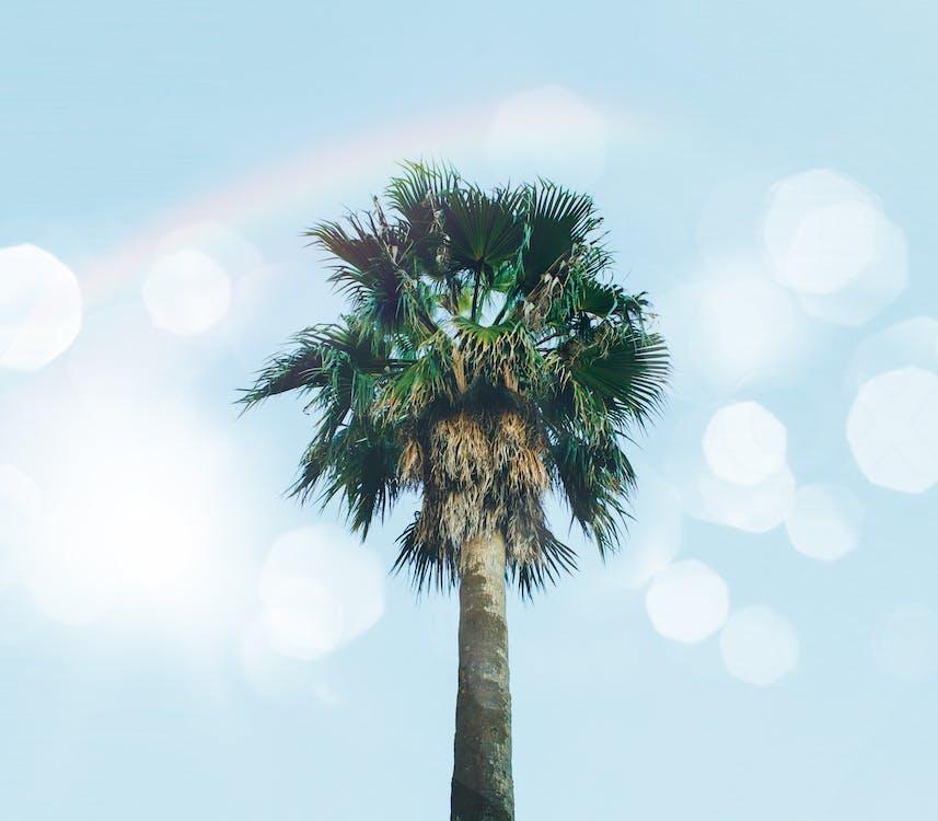 alto, árvore, folhas de palmeira