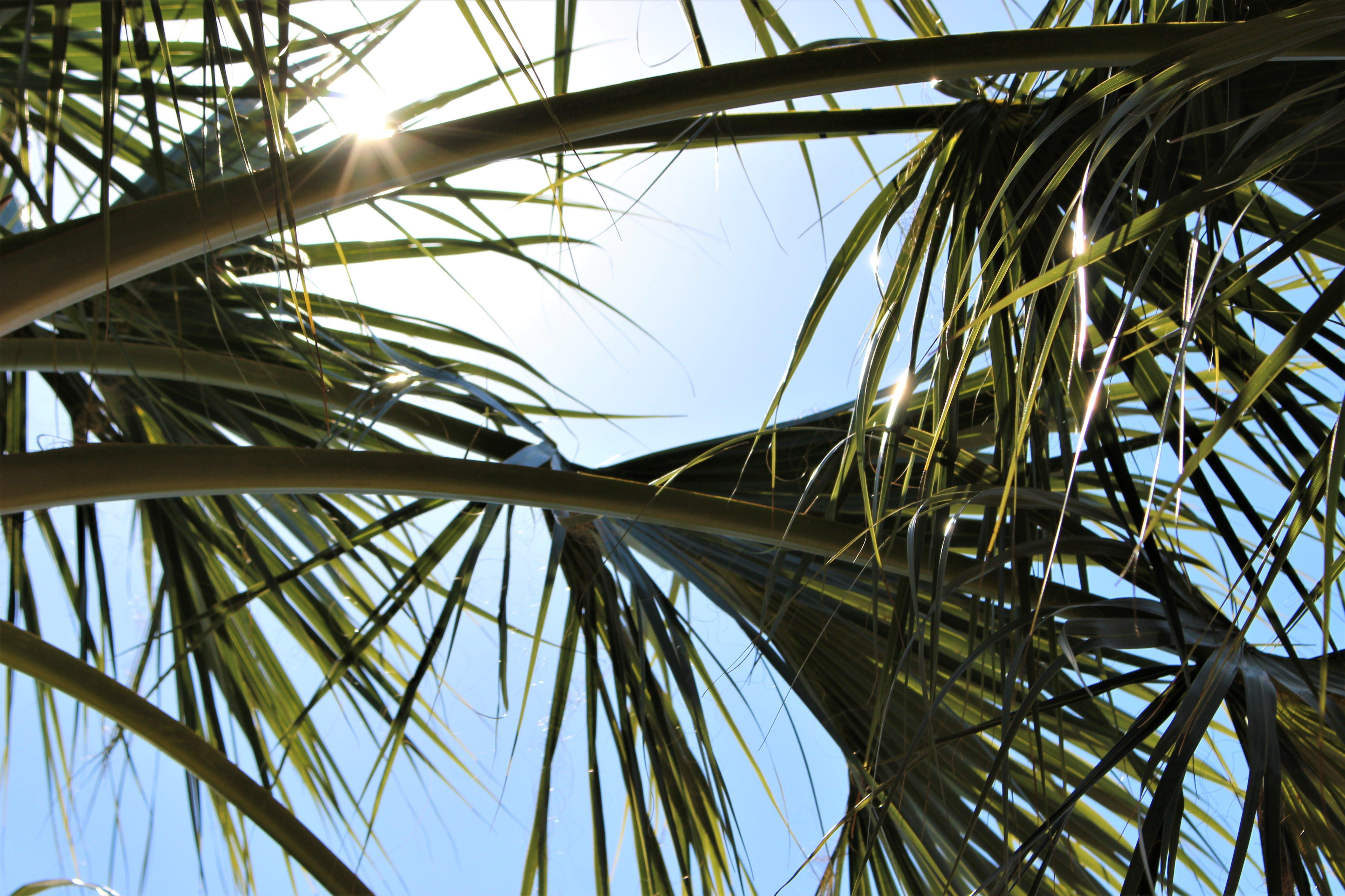 Kostenloses Stock Foto zu natur, palme, palmenblätter, sonne