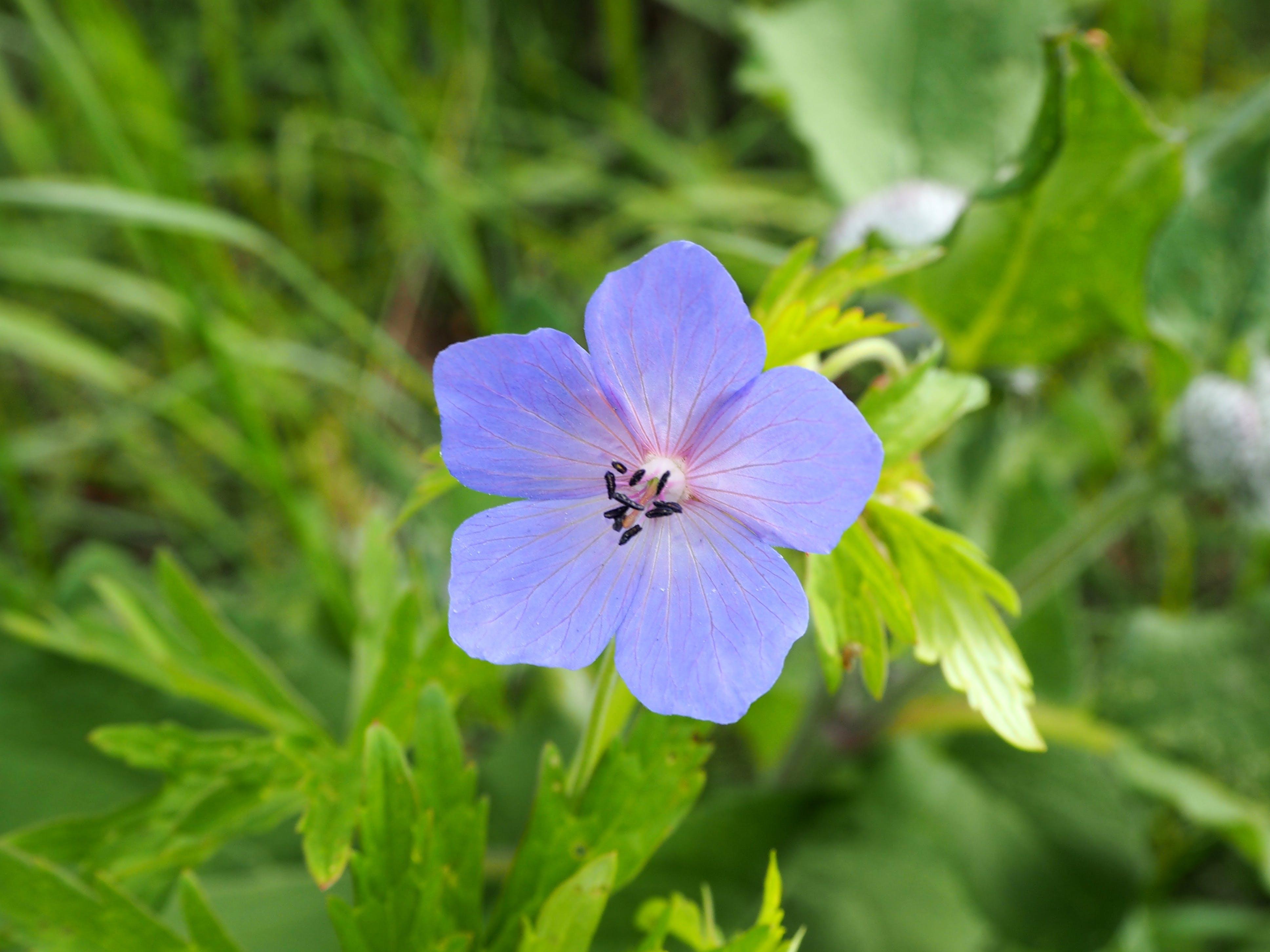 Kostenloses Stock Foto zu blau, blume, flowerpower, grün