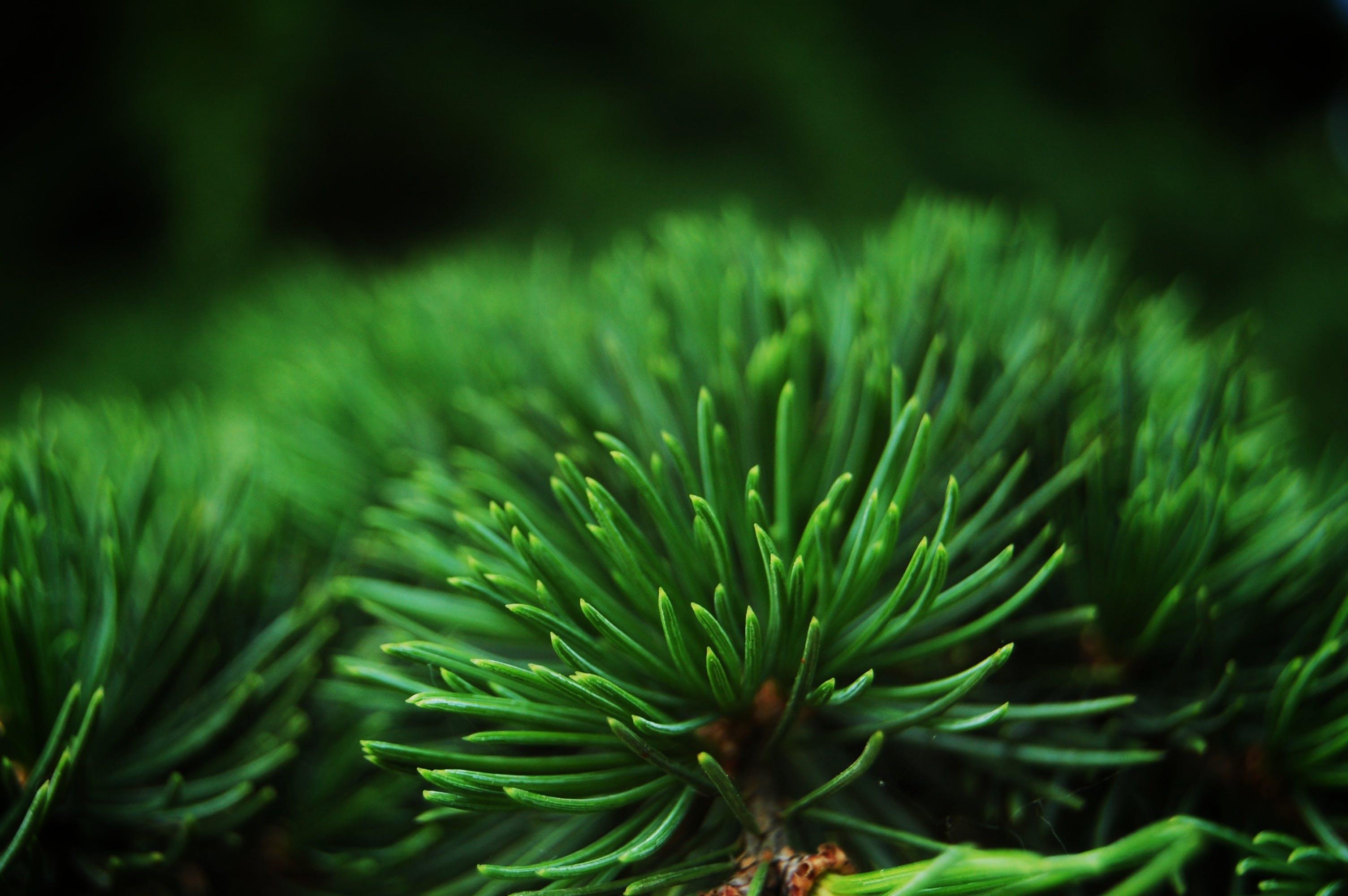 Základová fotografie zdarma na téma hloubka ostrosti, rostlina, zblízka, zelená