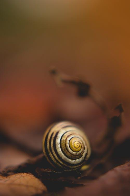 かたつむり, シェル, スロー, マクロの無料の写真素材