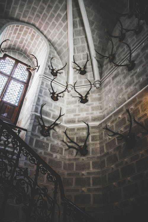 White Concrete Building Interior With Antlers Hanging