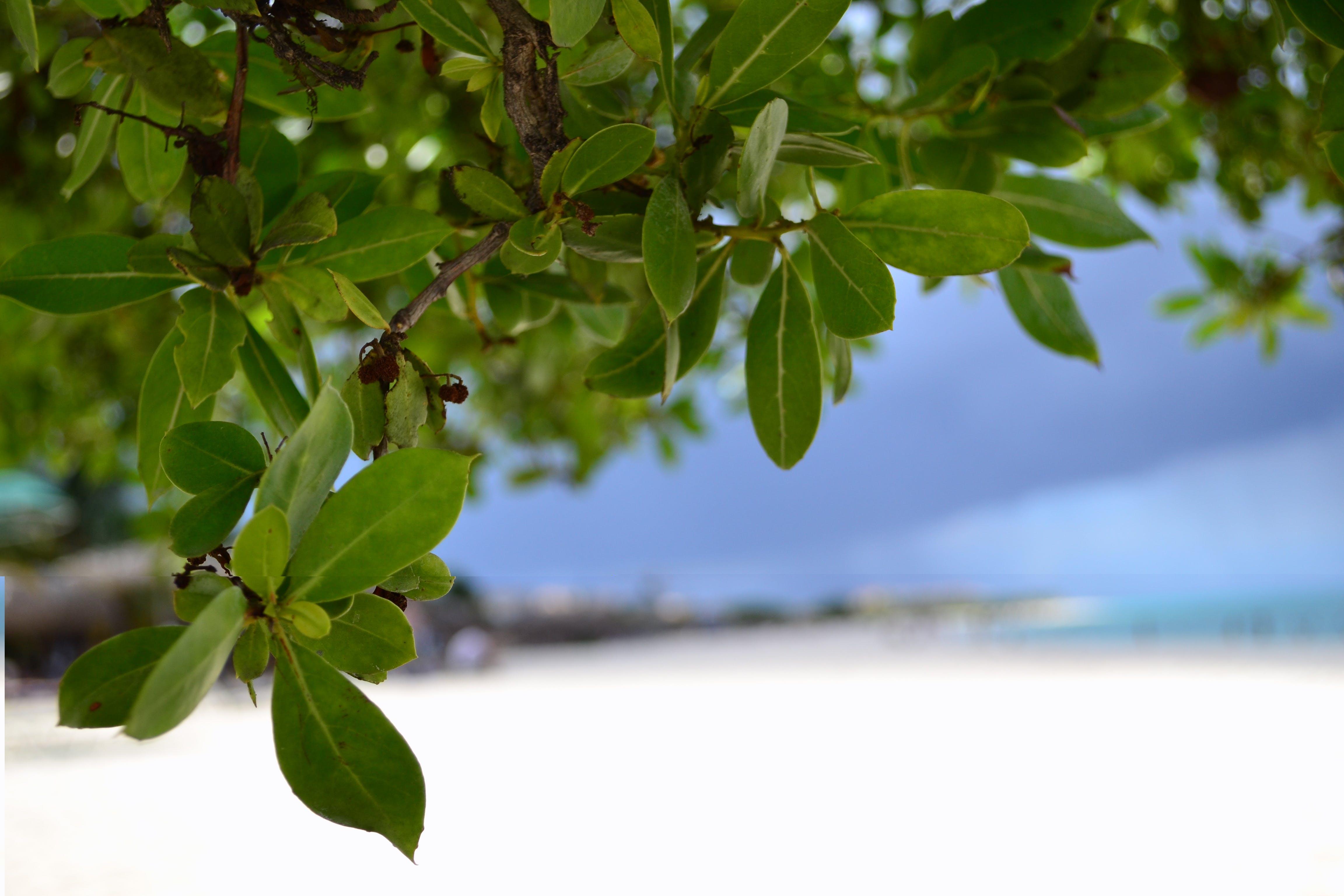 Free stock photo of aruba, árvore, beach, praia