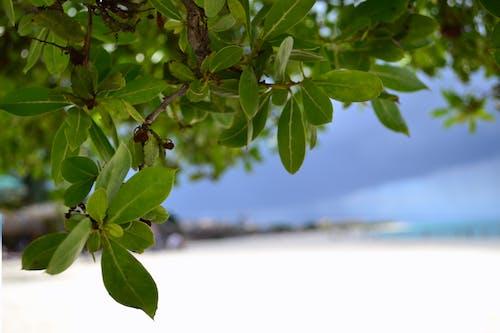 Gratis arkivbilde med ã¡rvore, aruba, praia, strand