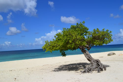 Gratis arkivbilde med ã¡rvore, praia, strand, tre