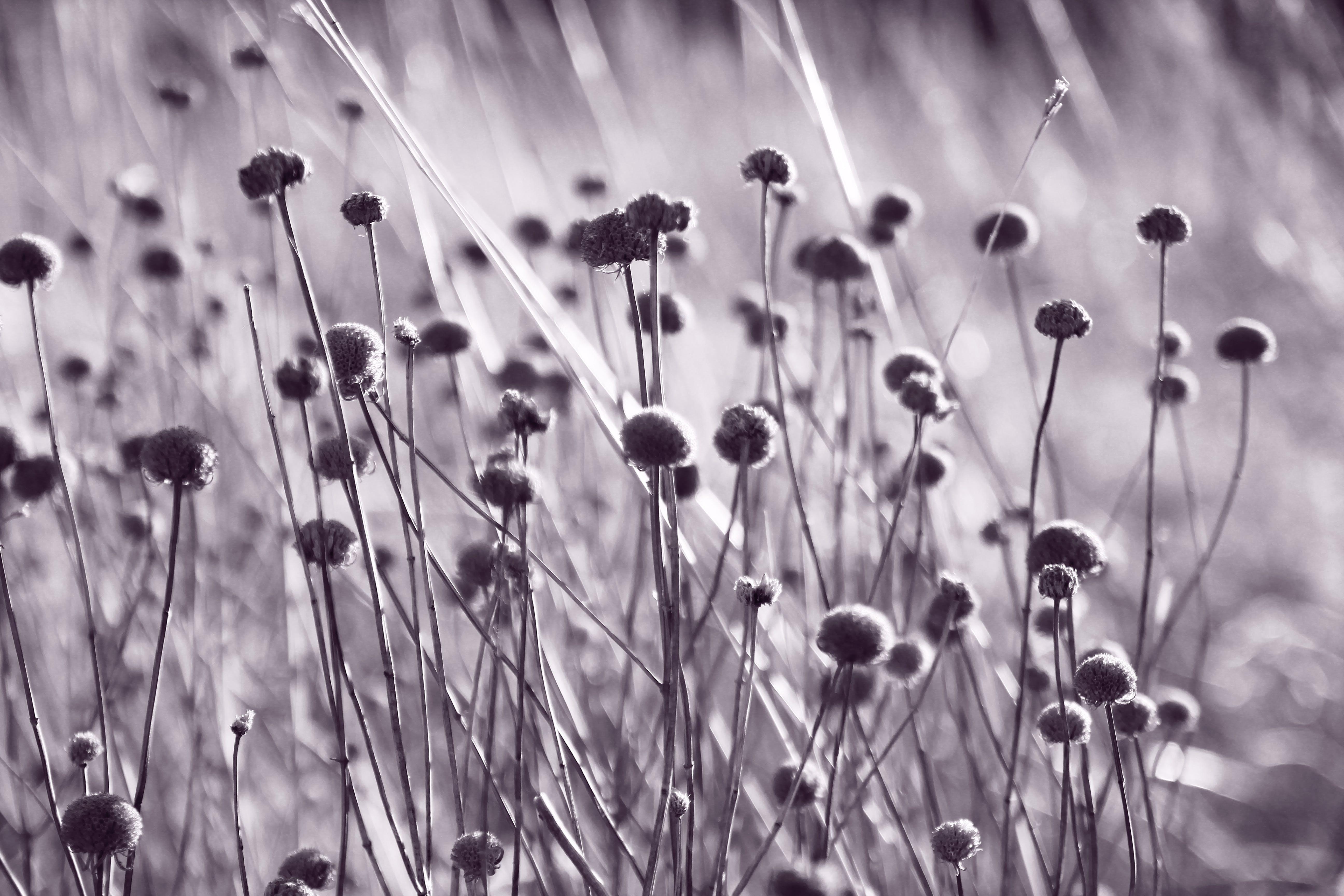 Δωρεάν στοκ φωτογραφιών με background, winnipeg, άγρια λουλούδια, αγριολούλουδο