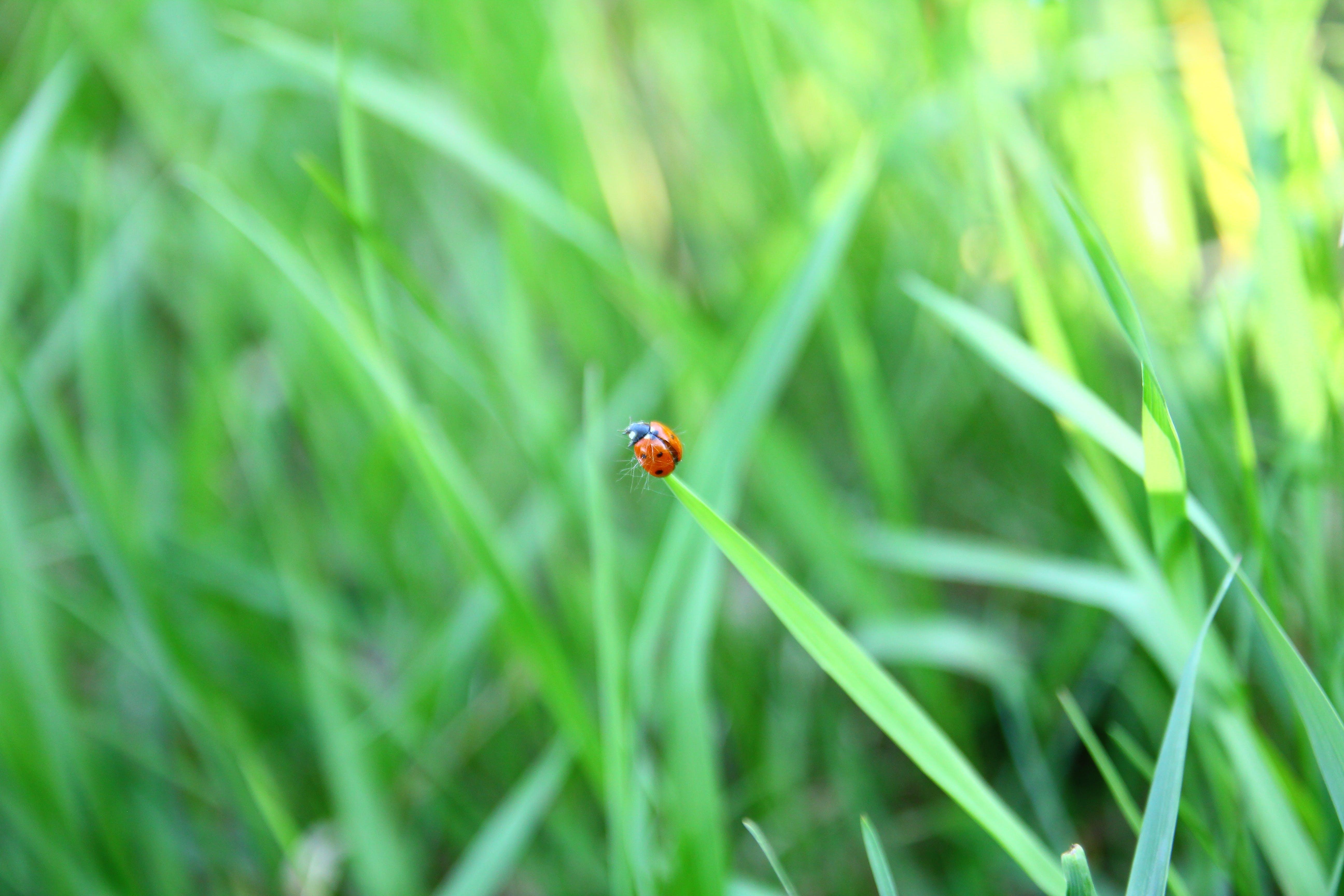 Δωρεάν στοκ φωτογραφιών με winnipeg, απόγευμα, γρασίδι, έντομο