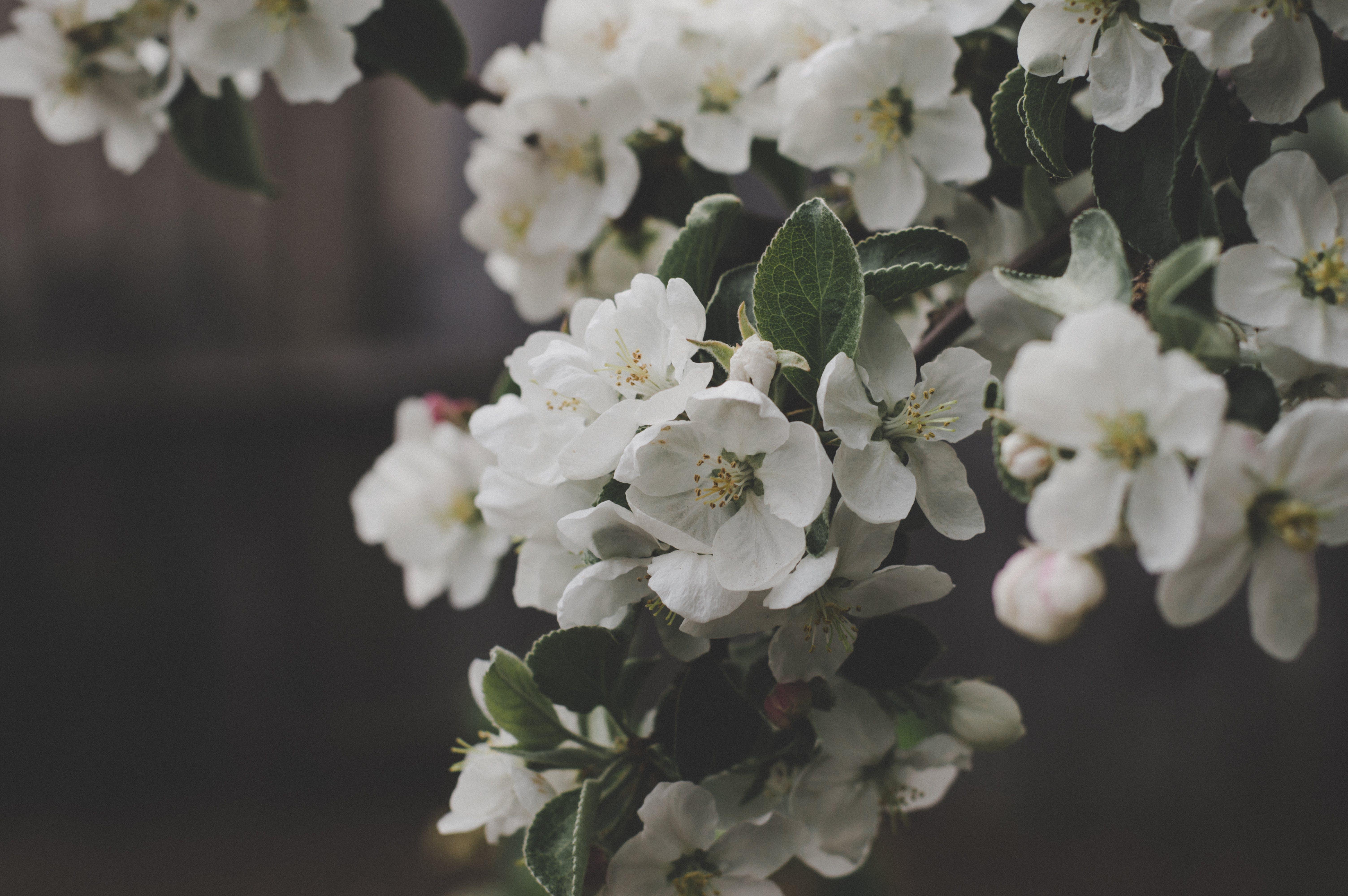 White Flowers Macro Shot