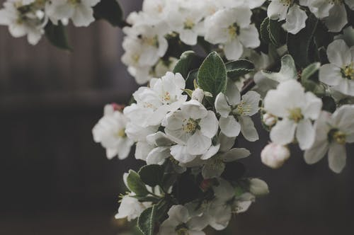 1000 Beautiful White Flowers Photos Pexels Free Stock Photos