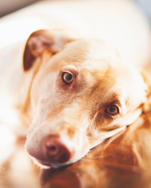 Gratis lagerfoto af close-up, dyr, dyrefotografering, hjemlig