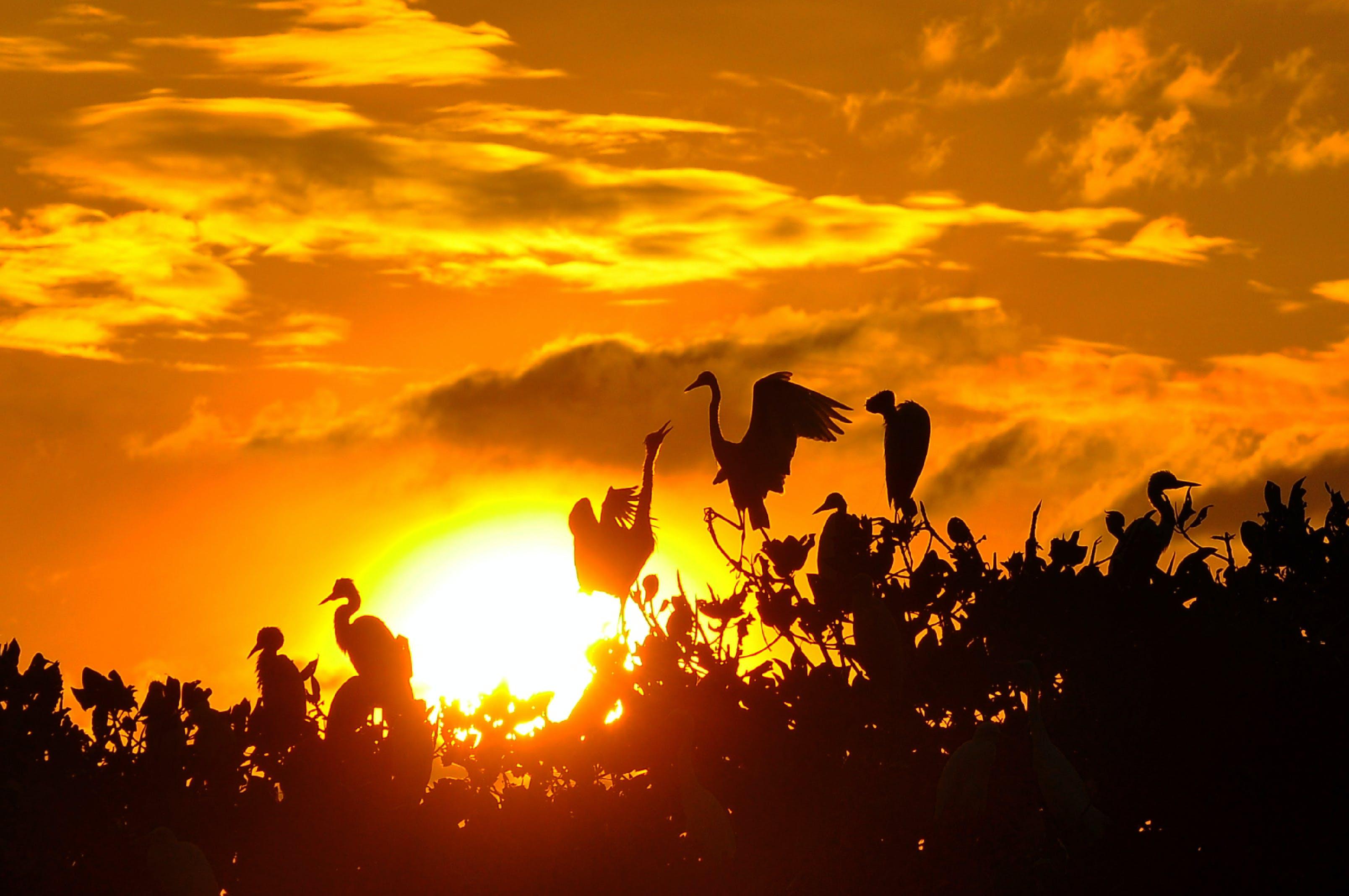 Free stock photo of #birds, #sunset, #wildlife