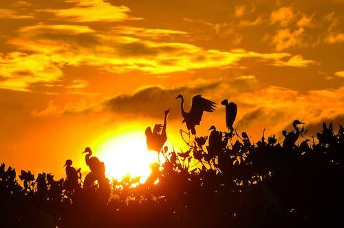 Foto d'estoc gratuïta de #ocells, #sunset, #wildlife