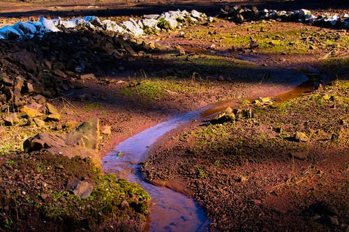 Foto d'estoc gratuïta de aigua neta, bosc, en directe, natura