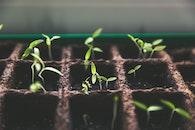 pflanzen, makro, erde