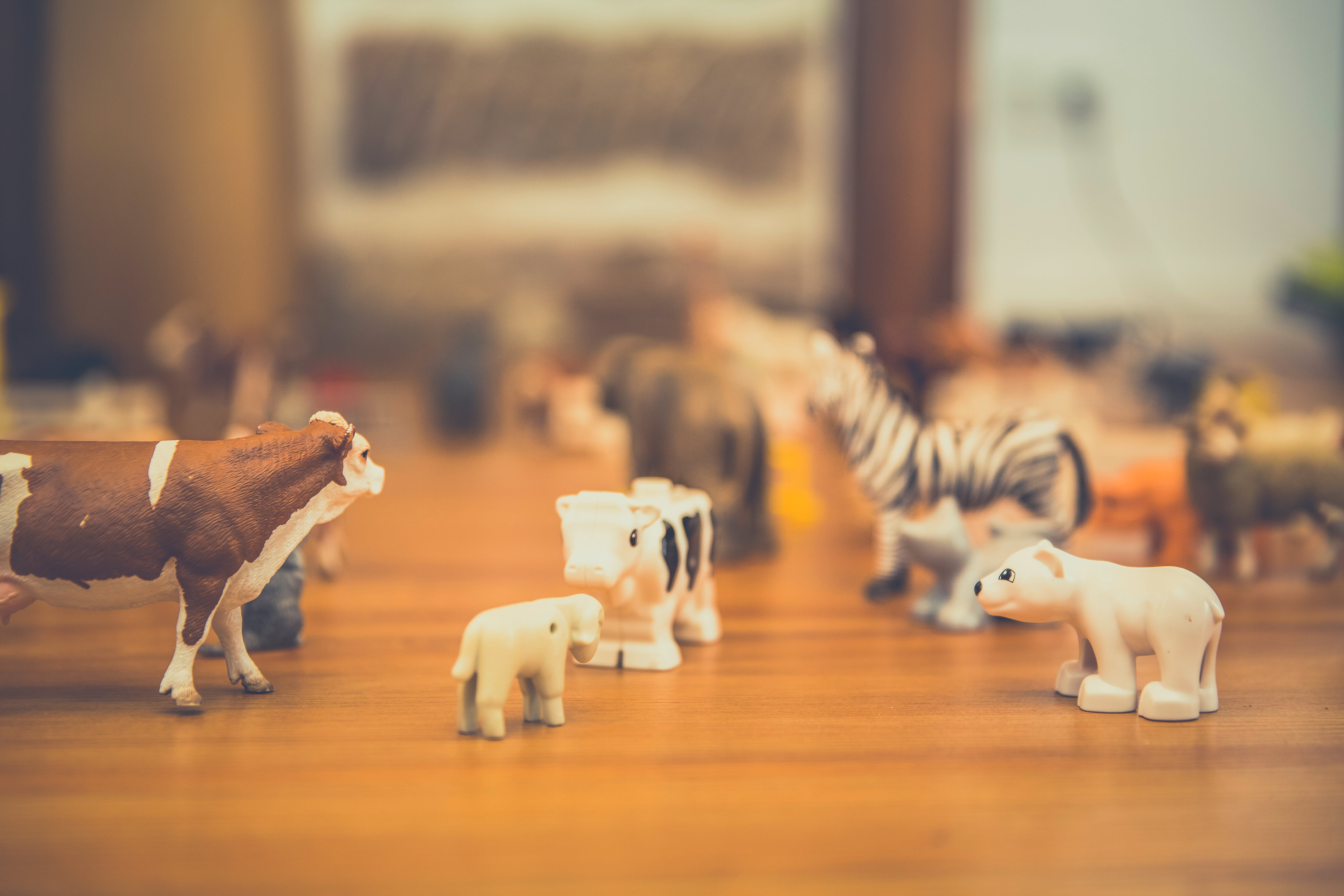 Free stock photo of animals, childhood, group, toy
