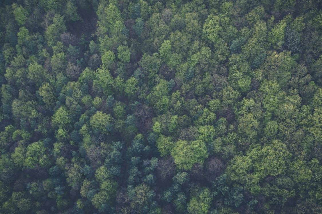 Free stock photo of bird's eye view, forest, green