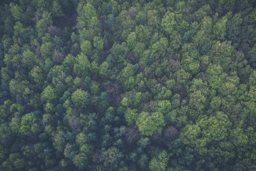 Kostenloses Stock Foto zu vogelperspektive, natur, wald, bäume