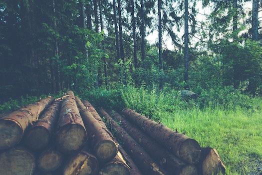 Wood Logs Near Trees