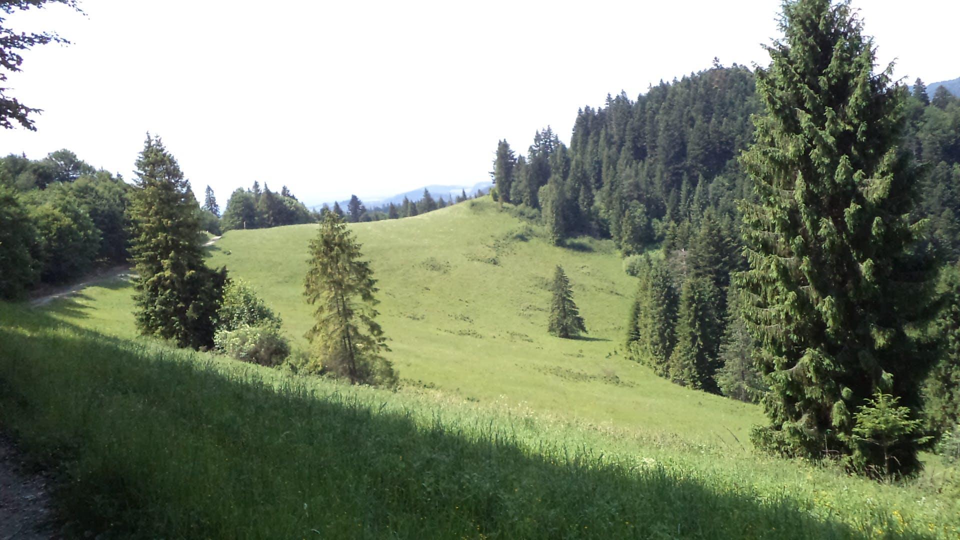 nature, slovakia, trees