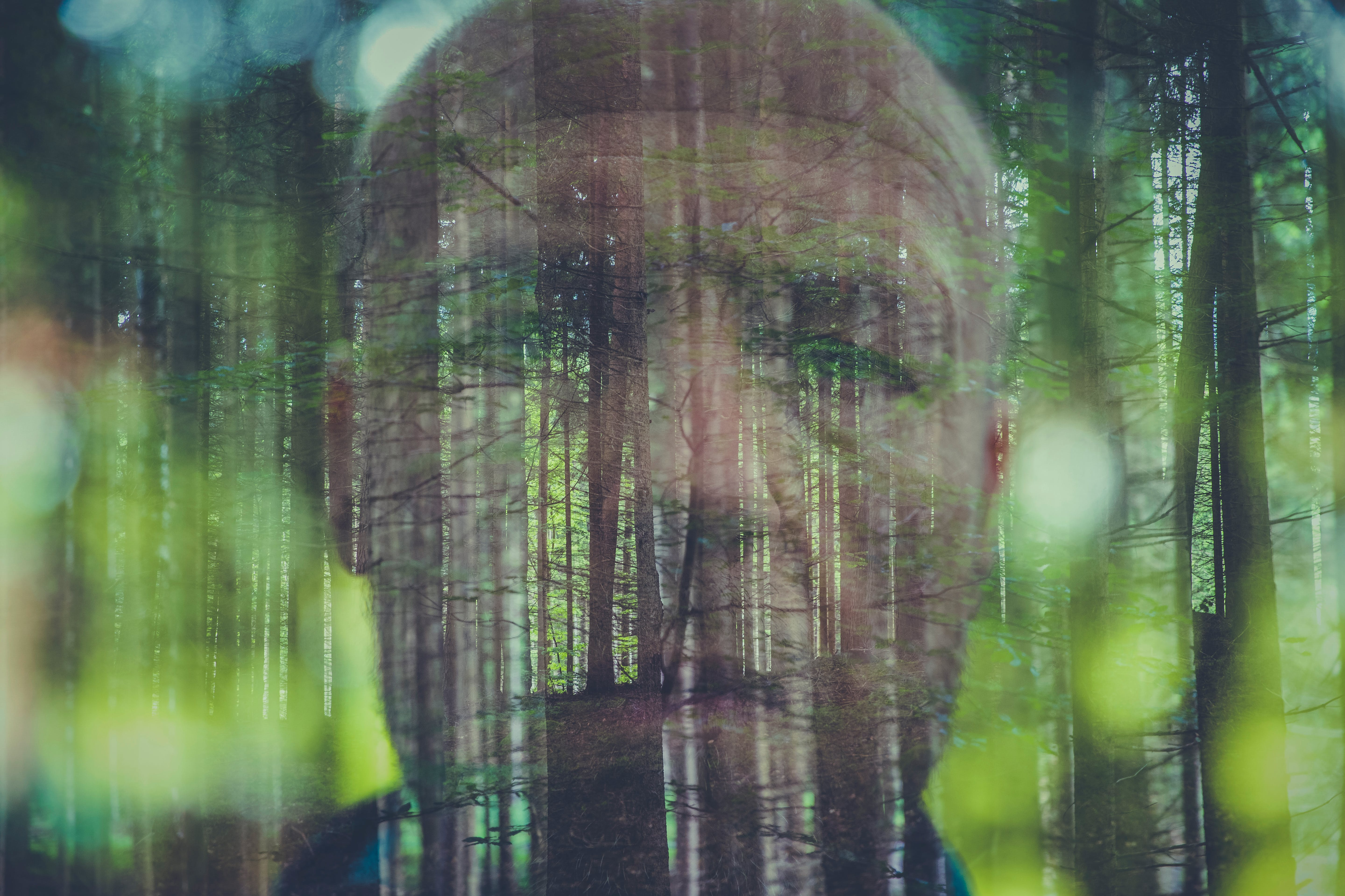 Free stock photo of double exposure, forest, men, wood